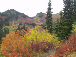 Fall Foilage from Tomyhoi Trail
